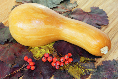Yellow Pumpkin, red berries on color autumn foliage and wooden background. Stock Photo