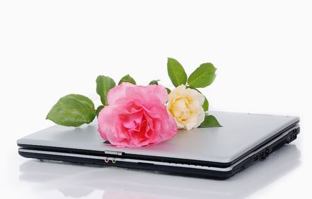 Beautiful roses and laptop, put together isolated photo