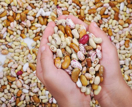 pulses: Many pieces and many kind of beans, wallpaper, pattern