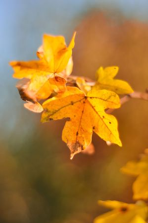 Fall details, leaves, colors, yellow, brown and other Stock Photo - 5554955