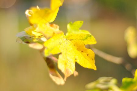 Fall details, leaves, colors, yellow, brown and other Stock Photo - 5555052