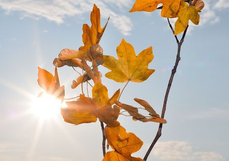 Fall details, leaves, colors, yellow, brown and other Stock Photo - 5555006