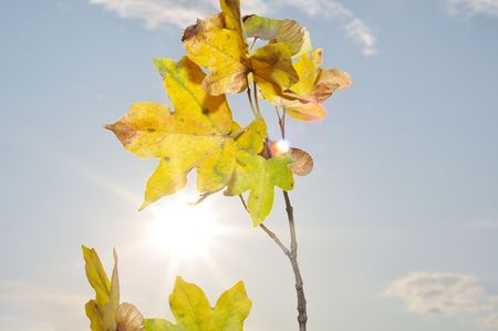 Fall details, leaves, colors, yellow, brown and other Stock Photo - 5555064