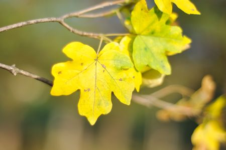 Fall details, leaves, colors, yellow, brown and other Stock Photo - 5555010