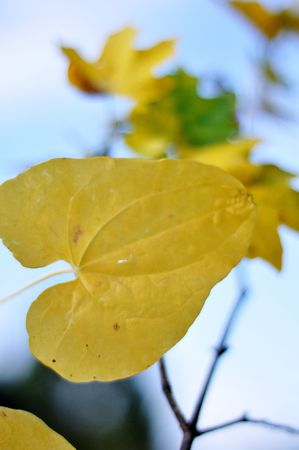 Fall details, leaves, colors, yellow and brown Stock Photo - 5555110