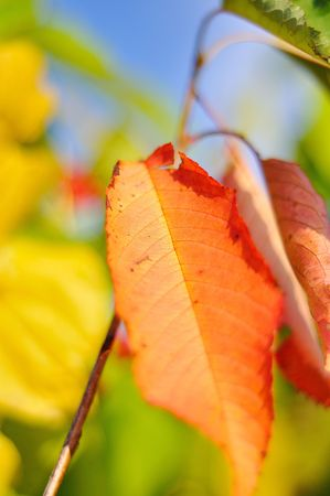 Fall details, leaves, colors, yellow, brown and other Stock Photo - 5554947