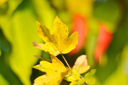 Fall details, leaves, colors, yellow, brown and other Stock Photo - 5554985