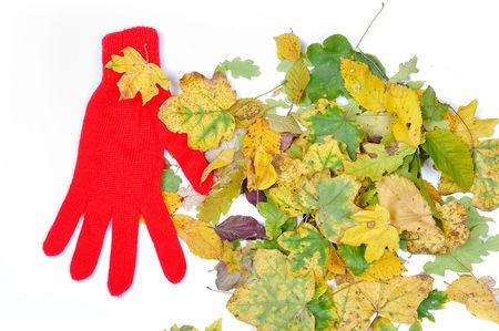 Leaves isolated, glove, fall time photo