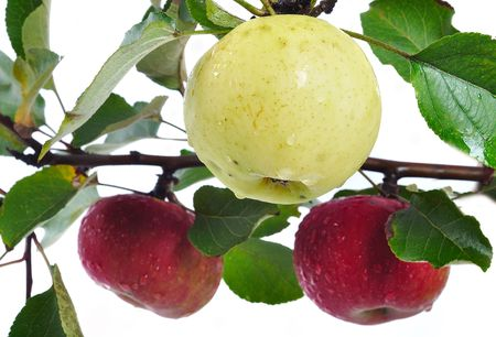 Isolated apple, harvest time, red color photo