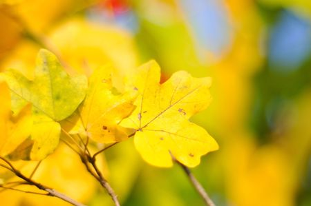 Fall details, leaves, colors, yellow, brown and other Stock Photo - 5799592