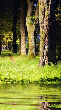 Forest, meadow, river photo