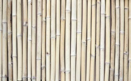 idylle: Bambus background Stock Photo