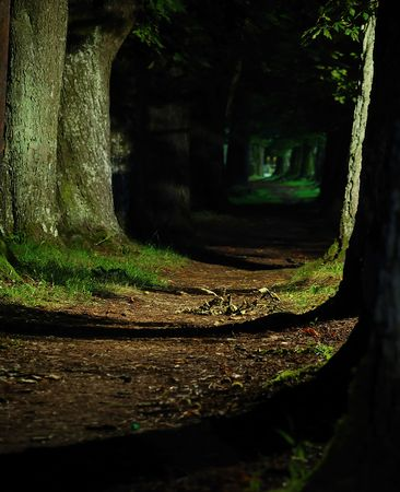 mystical forest: forst in dark