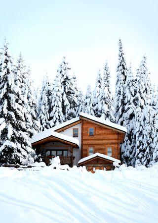 snow tree Stock Photo - 6161915