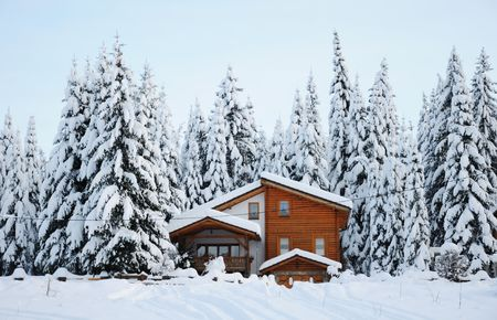 Winter beautiful scene  photo