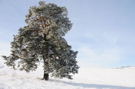 serbia xmas: Winter scene, natural beauty Stock Photo