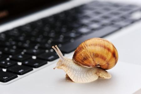 caracol: Conexi�n lenta como un caracol