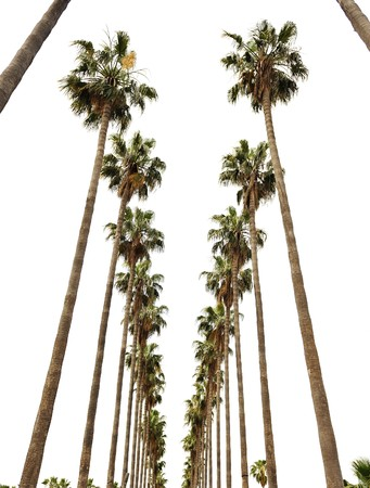 Hollywood palms Stock Photo - 7992927