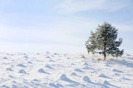 Winter and snow scene, tree alone Stock Photo - 8120345