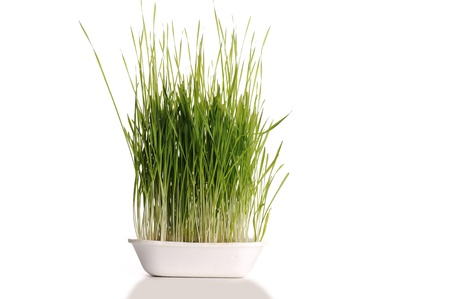 enriched: Grass in dish isolated Stock Photo