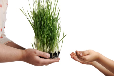 mother earth: Human hands, floral giving isolated, grass concept Stock Photo