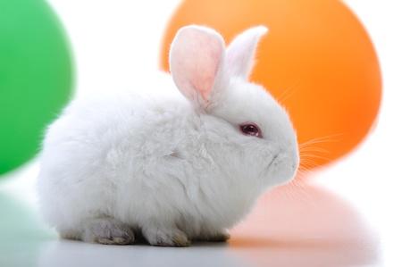 White beautiful rabbit, Easter bunny celebrating  photo
