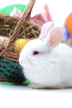 White beautiful rabbit, Easter bunny with eggs in basket  photo