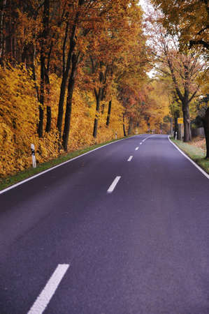 Road in forest photo