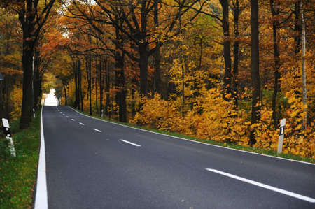 yellow car: Road in forest Stock Photo