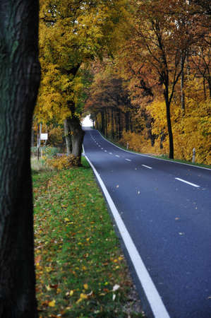 Road in forest, autumn photo