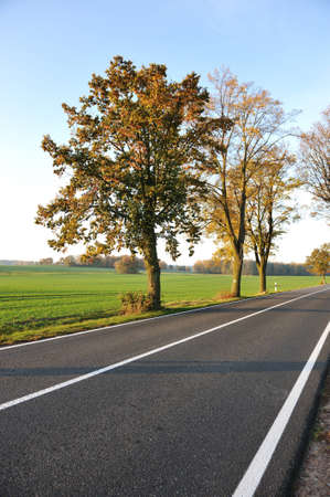 roadways: Country road, beautiful scene