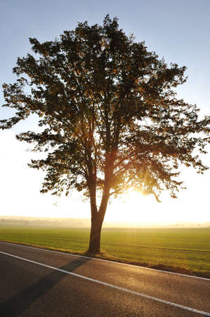 Tree on road at sunset photo