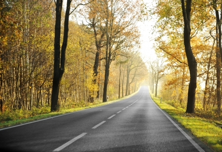 roadway: Country road in morning Stock Photo