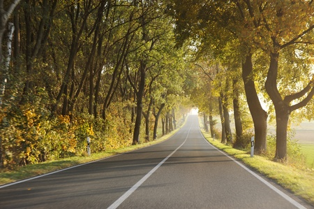Country road in morning photo