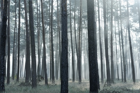 wooded: Mystic forest, sun rays entering trough the fog Stock Photo