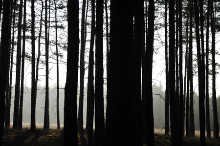 Mystic forest, sun rays entering trough the fog in the morning photo