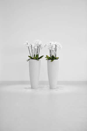 Flowers in vase, minimalistic decoration photo