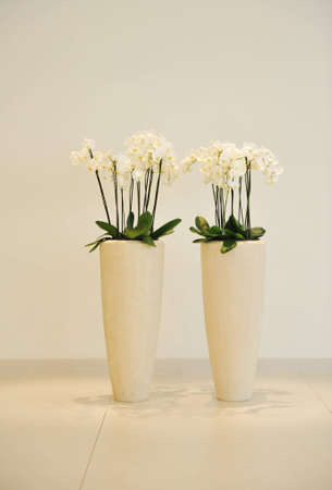 simetric: Flowers in vase