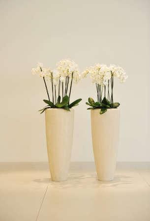 Flowers in vase photo