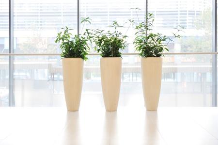 simetric: Green plants in vase Stock Photo