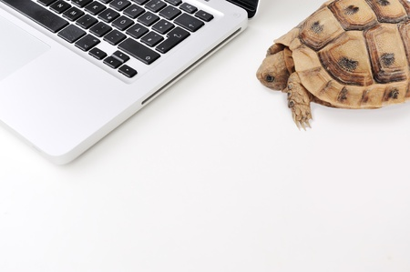 slow: Slow connection and computer as a turtle Stock Photo