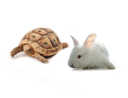 Rabit and Turtle photo