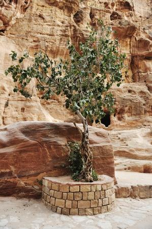 siq: The Siq - ancient canyon in Petra, Jordan Stock Photo