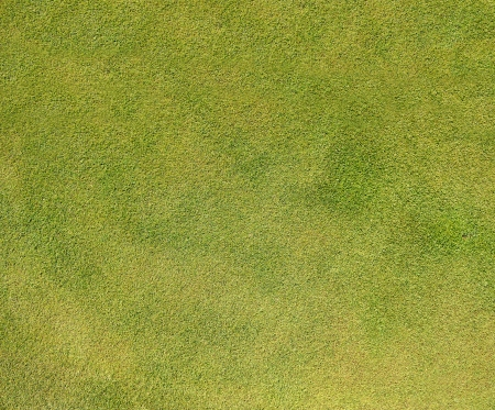 Grass in large resolution Stock Photo - 13676663