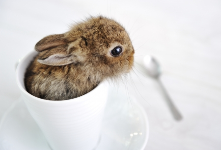 Rabbit cute baby Stock Photo