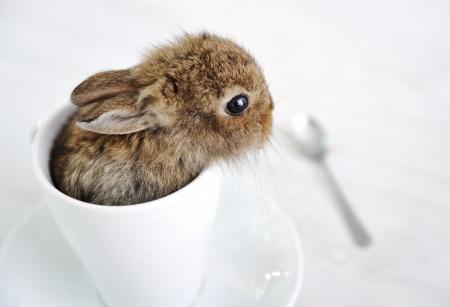 Rabbit cute baby Stock Photo