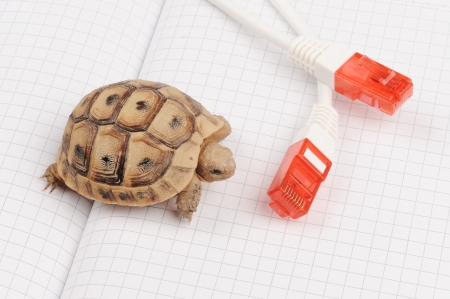 Turtle and slow connection photo
