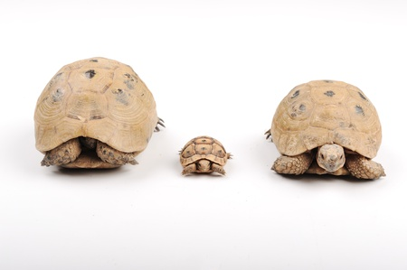 Turtle family photo