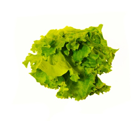 vibrat color: Lettuce isolated