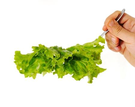 Lettuce in hand Stock Photo - 14593847